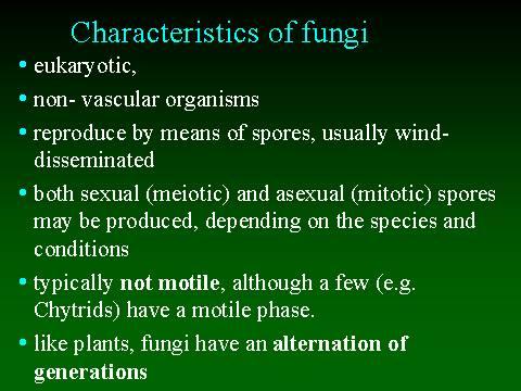Fungi Kingdom Definition For Kids